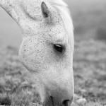 alimentacao-para-cavalos
