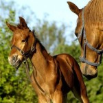 horse-and-its-foal-animal-hd-wallpaper-1920x1200-18057