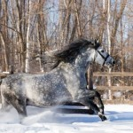 horse-running-in-the-snow-animal-hd-wallpaper-1920x1200-29607