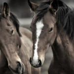 horses-animal-hd-wallpaper-1920x1200-28375
